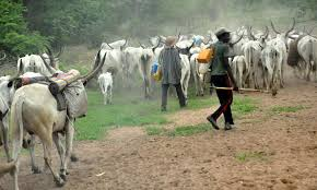 Fulani herdsmen: Bayelsa warns against politicization of grazing area   …says security implications informed decision, not politics