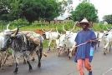 CAN kicks against cattle rearing/ grazing bill in Edo