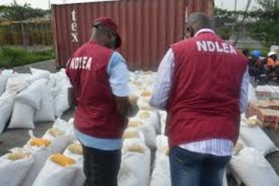 NDLEA arrests poly graduate with cocaine, cannabis