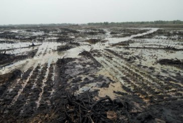 Fresh Oil Spill Recorded In Ogoniland, According To Our Sources
